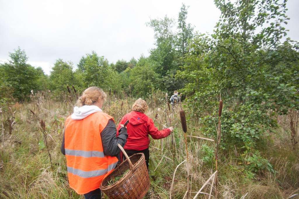 Правила безопасности в лесу и советы для родственников потерявшихся